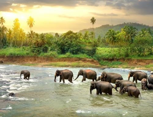 Vacanta exotica in Sri Lanka, 8 nopti! (avion + cazare + mic dejun + transfer)